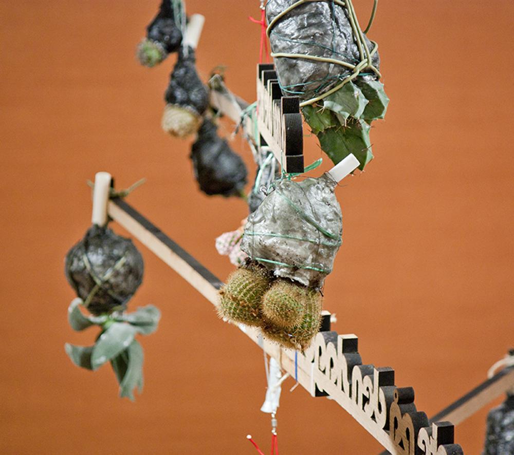 Egetræ og kaktus 2012