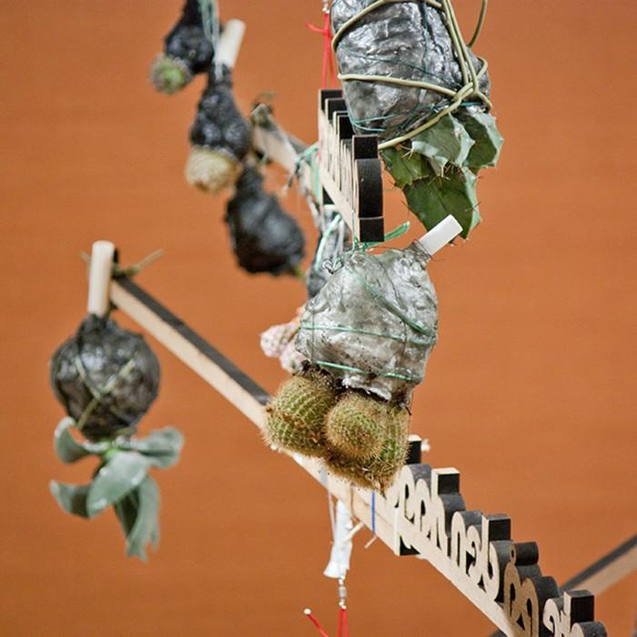 Oak Wood and Cactuses, 2012